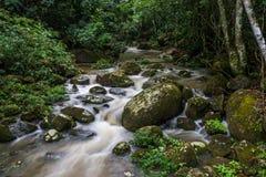 Dschungel-Fluss in großer Tropeninsel Ilha Rio tun Janeiro büstenhalter lizenzfreie stockfotografie