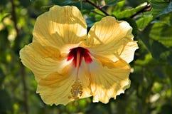 Dschungel-Gold Lizenzfreies Stockbild