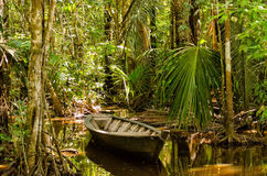 Jungle. Hidden rowboat in the jungle Stock Image