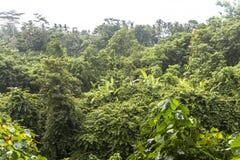 Dschungel im Affewald von Ubud, Bali Stockbild