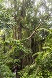Dschungel im Affewald von Ubud, Bali Stockbilder