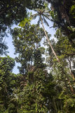 Dschungel im Affewald von Ubud, Bali Lizenzfreie Stockfotos