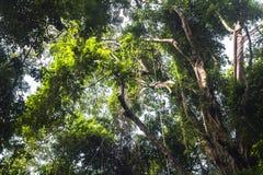 Dschungel im Affewald von Ubud, Bali Lizenzfreies Stockbild