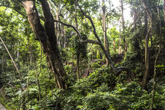 Dschungel im Affewald von Ubud, Bali Lizenzfreies Stockfoto