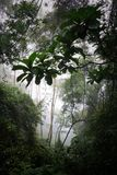 Dschungel im Nebel Stockbild