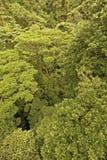 Dschungel-Kabinendach lizenzfreie stockbilder