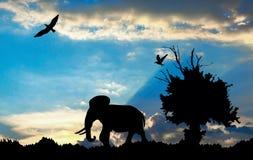 Dschungel mit altem Baum, Vögeln und Elefanten auf blauem bewölktem Sonnenuntergang Lizenzfreie Stockbilder