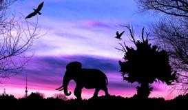 Dschungel mit altem Baum, Vögeln und Elefanten auf purpurrotem bewölktem Sonnenuntergang Stockbilder