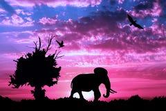 Dschungel mit altem Baum, Vögeln und Elefanten auf purpurrotem bewölktem Sonnenuntergang Stockfotografie