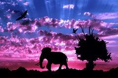 Dschungel mit altem Baum, Vögeln und Elefanten auf purpurrotem bewölktem Sonnenuntergang Lizenzfreie Stockfotografie
