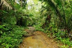 Dschungel in Mittelamerika Stockbilder