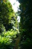 Dschungel, Nationalpark Fiordland stockfotos