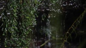 Dschungel-Natur Wasserfälle und Anlagen stock video