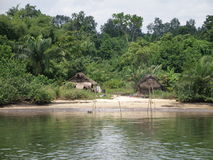 Dschungel in Nigeria Lizenzfreies Stockbild