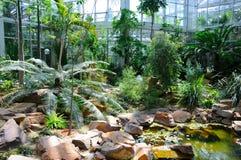 Dschungel in Palmen Garten, Frankfurt am Main, Hessen, Deutschland Stockbild