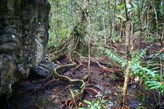 Dschungel in Philippinen lizenzfreie stockfotografie