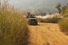 Dschungel-Safari stockbilder