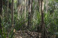 Dschungel in Sansibar Stockbilder