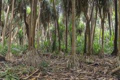 Dschungel in Sansibar Lizenzfreie Stockbilder
