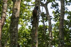 Dschungel in Sansibar Lizenzfreie Stockfotos