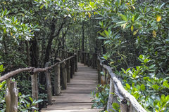 Dschungel in Sansibar lizenzfreies stockbild