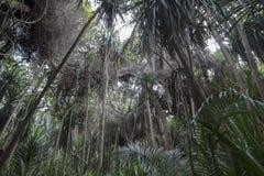 Dschungel in Sansibar lizenzfreie stockfotografie