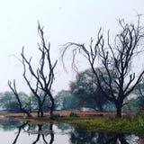 Dschungel-Schönheit Stockfotos