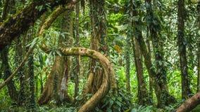 Dschungel-Schwingungen Stockfoto
