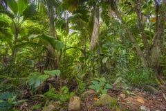 Dschungel, Seychellen lizenzfreie stockbilder