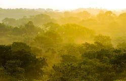Dschungel-Sonnenuntergang Treetops Lizenzfreie Stockfotos