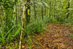 Dschungel-Spur, Costa Rica Lizenzfreies Stockfoto