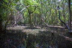 Dschungel Sri Lanka Stockfoto
