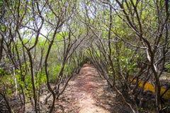 Dschungel Sri Lanka Lizenzfreie Stockfotos