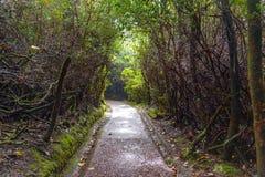 Dschungel-Straße Stockbilder