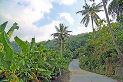 Dschungel-Straße Stockfoto