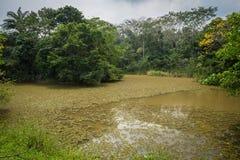Dschungel-Sumpf Lizenzfreie Stockbilder