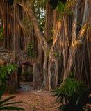 Dschungel-Tür Stockfotografie