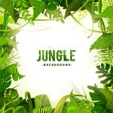 Dschungel-tropischer Dekorations-Hintergrund Lizenzfreie Stockfotos
