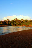 Dschungel und der Fluss Stockfotos