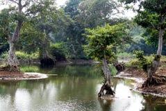 Dschungel und Wasser scape Stockbilder