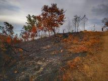 Dschungel unten gebrannt und Bodenerosion nachher von einer trockenen Monsunzeit lizenzfreie stockfotografie