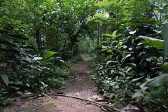 Dschungel von Goa Stockfotografie