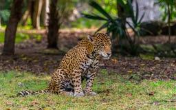 Dschungel von Mexiko Lizenzfreie Stockfotos