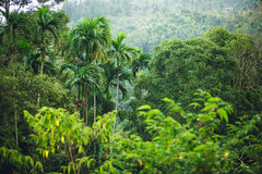 Dschungel von Thailand Stockbild