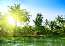 Dschungel von Thailand Stockbilder