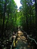 Dschungel-Weg Lizenzfreie Stockfotos