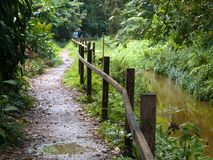 Dschungel-Weg stockfotografie