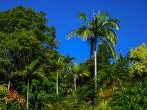 Dschungel wie Landschaft - schöner Regenwald nahe Brisbane Queensland Australien mit intensiv blauem Himmel und großen Bäumen stockbild