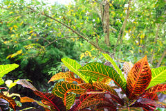 Dschungel Yucatan Mexiko Zentralamerika Lizenzfreies Stockbild