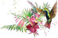Dschungelanlage, -vogel und -blumen kolibri Regenwaldaquarellillustration Stockfoto